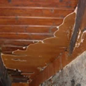 Services professionnels pour le traitement du bois